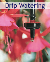 Drip watering promo: links to drip watering category